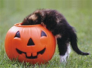 7111 Halloween Card - Cat in jack-o (Pack of 50)