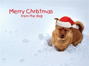 7553 Christmas Card - Dog in snow (Pack of 50)