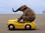 1217 Birthday Card - Elephant driving (Pack of 50)