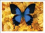 6415 Thank You Card - Butterfly in flower patch (Pack of 50)