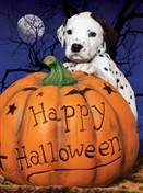 7127 Halloween Card - Puppy, pumpkin & full moon (Pack of 50)