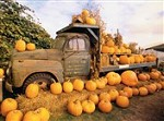 7314 Thanksgiving Card - Truck w/ pumpkins (Pack of 50)