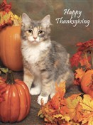 7326 Thanksgiving Card - Cat, pumpkins, leaves (Pack of 50)