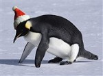 7550 Christmas Card - Penguin push-up (Pack of 50)