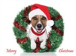 7561 Christmas Card - Dog with santa hat, wreath (Pack of 50)