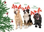 7562 Christmas Card - Three dogs as reindeers (Pack of 50)